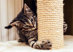 Как приучить котенка к когтеточке?